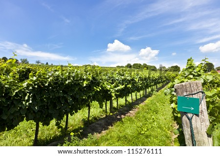 Vineyard at sunny day with blank sign for text additon of type of wine