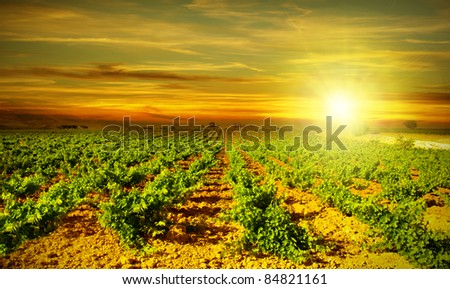 Vineyard autumn landscape, bright sunset at the valley of grapes, agricultural industry at harvest season, healthy organic fruits growing on the field