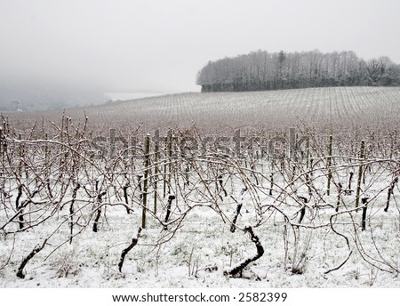 Vineyard covered with snow, England