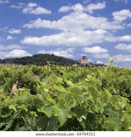Vineyard, from Chateauneuf-du-Pape Provence