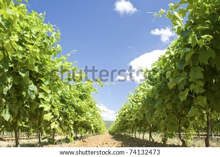 Vineyard from Luberon in Provence. France - stock photo