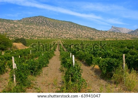 vineyard in a mountain valley