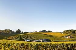 Vineyard in Adelaide Hills autumn