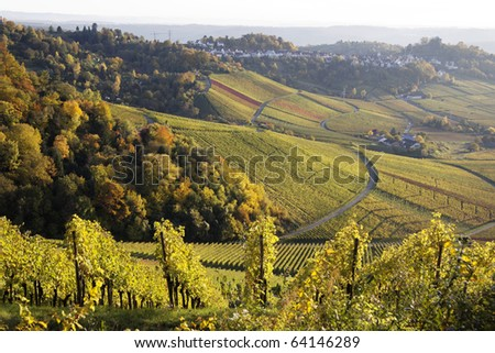 Vineyard in autumn in Stuttgart (Kapplelberg), Germany