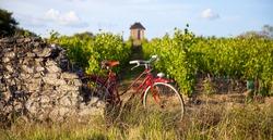 Vineyard in France, old red bike in the vineyards in spring.