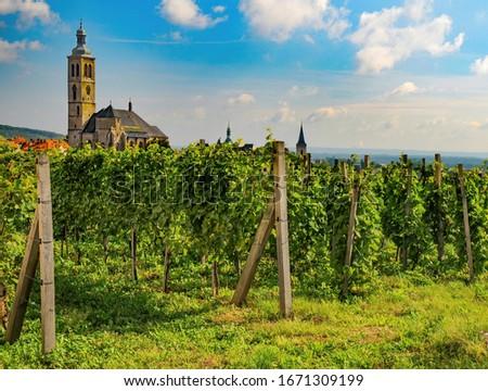 Vineyard in Kutna Hora, Czech Republic. Tower of St. James church on backgrouind. UNESCO World Heritage Site Foto stock ©