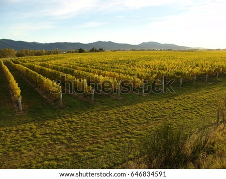 Vineyard in Marlborough, New Zealand #646834591
