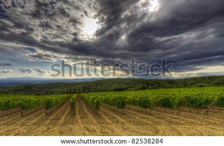 Vineyard in Montalcino, Tuscany with a dramatic evening sky before sunset