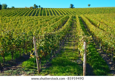 Vineyard in Oppenheim/Germany in autumn