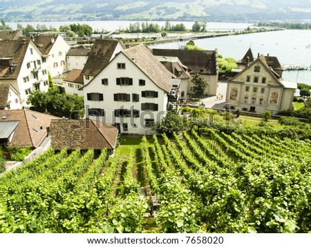 Vineyard in Rapperswil in background big zurich lake