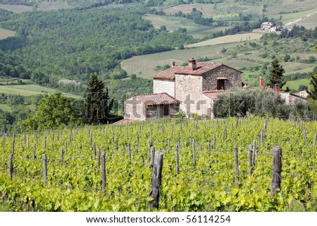 Vineyard in the Chianti region of Tuscany, Italy