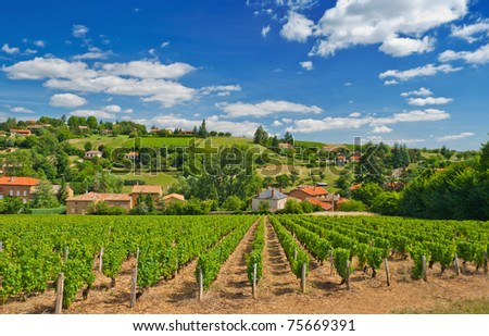 Vineyard in the famous wine making region of Beaujolais, France, during a pleasant summer morning