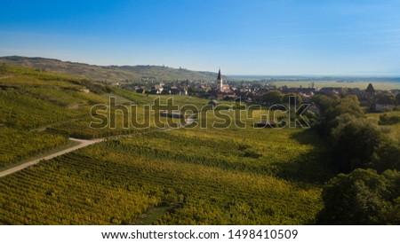 Vineyard in the proximity of Ammerschwihr, a picturesque Alsatian town #1498410509
