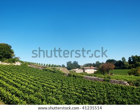 Vineyard in the village of Saint Emilion in France