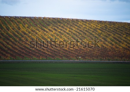 Vineyard in yellow autumnal colors, with a road and fields of grass