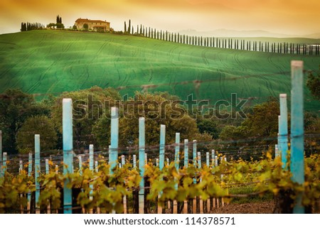 Vineyard landscape in Tuscany, Italy