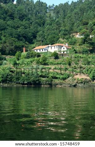 vineyard near river douro in north of portugal - stock photo