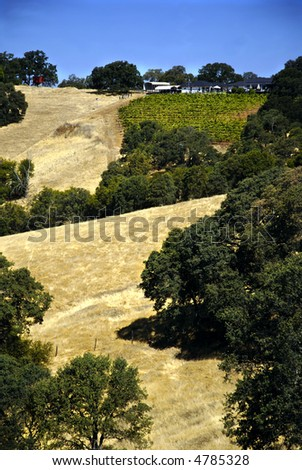 Vineyard nestled in the hills of Amador County, California - stock photo