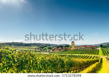 Vineyard of a farm at southern Brazil, Bento Gonçalves, with green grape trees in a valley above a full sun and shiny day