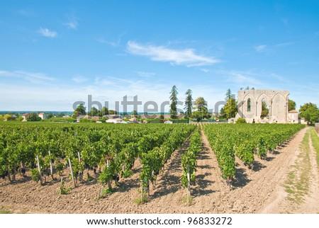 Vineyard of Saint-Emilion in Aquitaine, France.