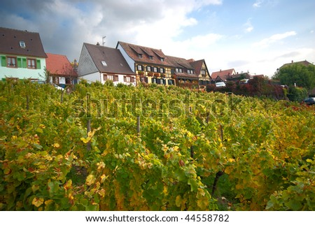 vineyard on a hill with houses on top