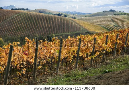 Vineyard on hills in fall with orange leaves