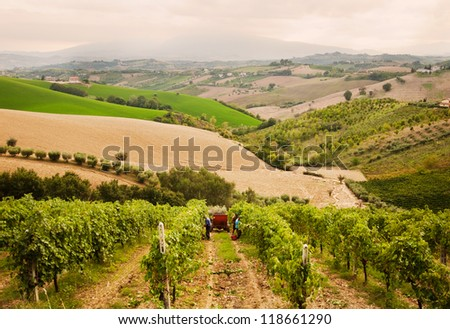 Vineyard on hills with people harvesting grapes