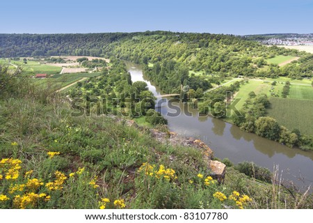 Vineyard overlooking the river Neckar, Landscape of Hessigheim, Germany