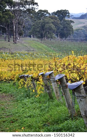 Vineyard post ends in McLaren Vale, South Australia