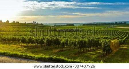 Vineyard Sunrise - Bordeaux Vineyard-France, Aquitaine, Gironde, 33, Targon.