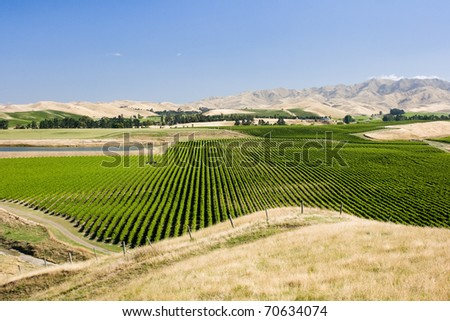 Vineyard surrounded by hills - stock photo