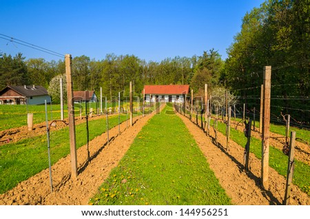 Vineyard traditional house village spring season, Burgenland, Austria