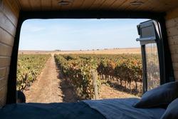 Vineyard view from inside a sel converted camper van living van life in Alentejo, Portugal