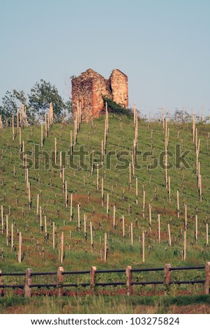vineyard with a rural building in ruin, Piedmont , Italy