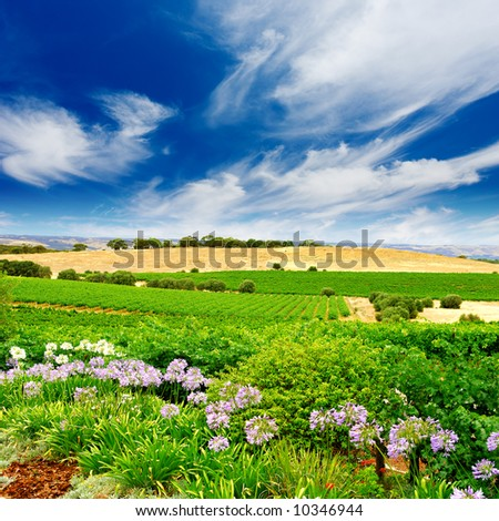 Vineyard with flowers in the foreground