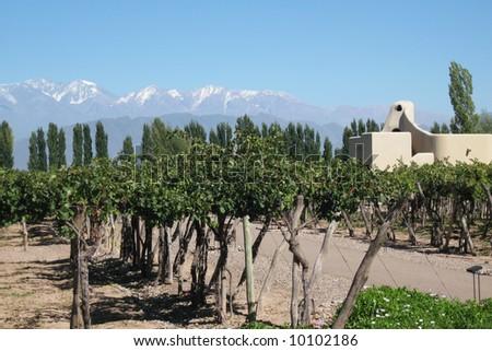 vineyard with modern building Mendoza Argentina