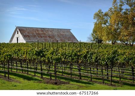 Vineyard with Old Barn