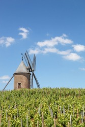 Vineyard with old windmill in Moulin a Vent, Beaujolais. France