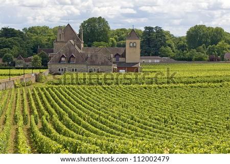 Vineyard, with Village in Bourgogne, Burgundy. France.
