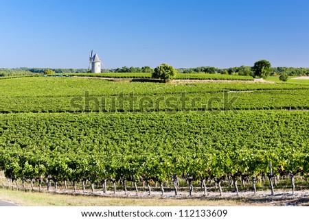 vineyard with windmill near Blaignan, Bordeaux Region, France