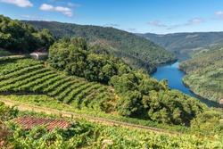 Vineyards along Minho River, Ribeira Sacra in Lugo province, Spain