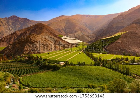 Vineyards among the hills of Valle del Elqui - Chile Сток-фото ©