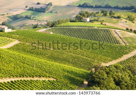 Vineyards and a farm house - stock photo