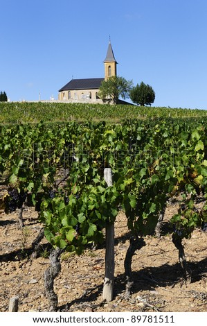 vineyards and church in french country in summer - stock photo