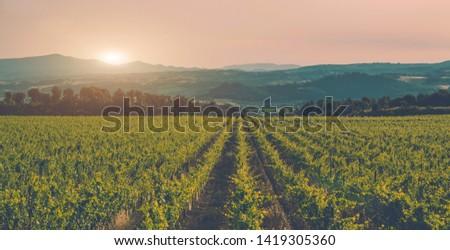 Vineyards and countryside landscape, Tuscany, Italy Europe. Large vineyard plantation under beautiful sunset light. Wine production region. Vintage tone filter effect with noise and grain #1419305360
