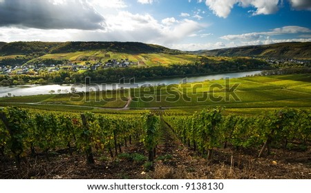 vineyards and forest along the mosel river in germany