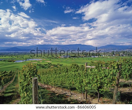 Vineyards and golf course by Kelowna
