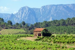 Vineyards and mountains in the Saint Chinian wine region of the Languedoc, south of France