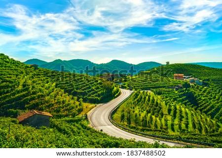 Vineyards and road. Prosecco Hills, Unesco World Heritage Site. Valdobbiadene, Veneto, Italy