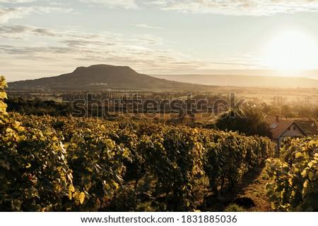 Vineyards and the Badacsony mountain with Lake Balaton at sunset in Hungary Stock photo ©
